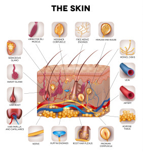 Learn more about your skin at Dermatology Specialists of Charlotte
